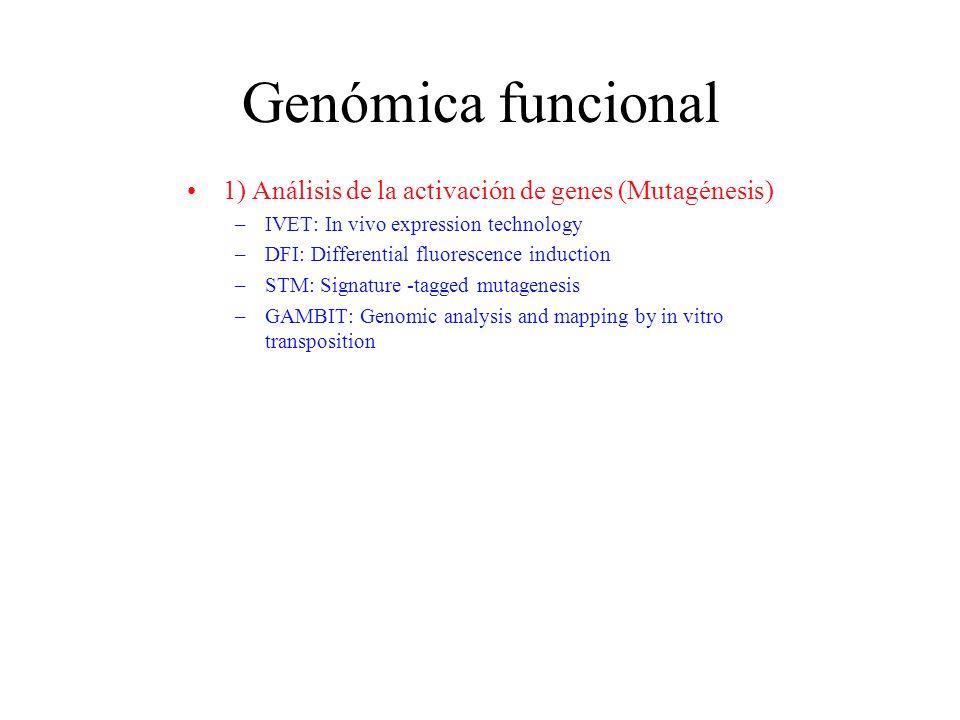Genómica funcional 1) Análisis de la activación de genes (Mutagénesis)