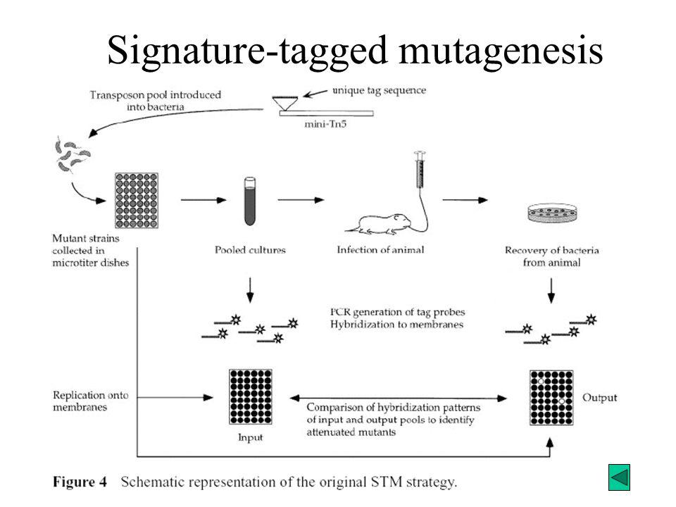 Signature-tagged mutagenesis