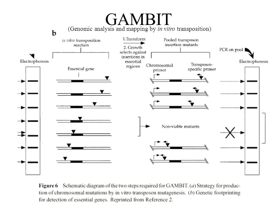 GAMBIT (Genomic analysis and mapping by in vitro transposition)