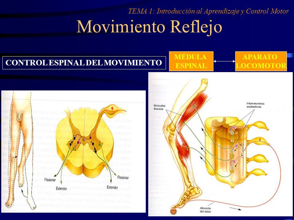 Movimiento Reflejo CONTROL ESPINAL DEL MOVIMIENTO
