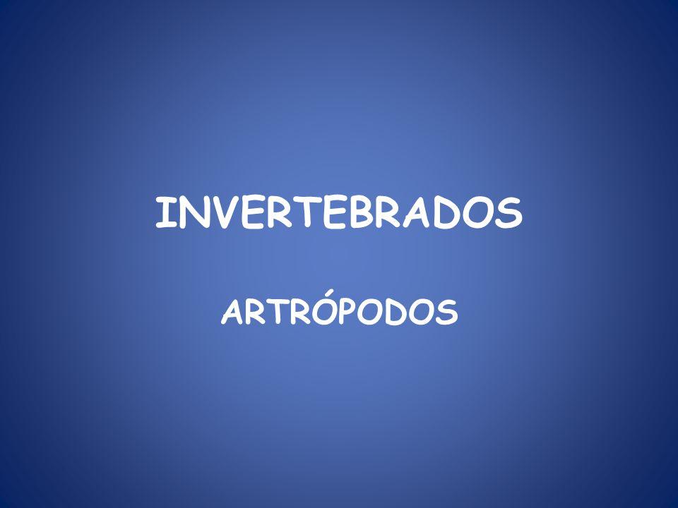 INVERTEBRADOS ARTRÓPODOS. - ppt video online descargar