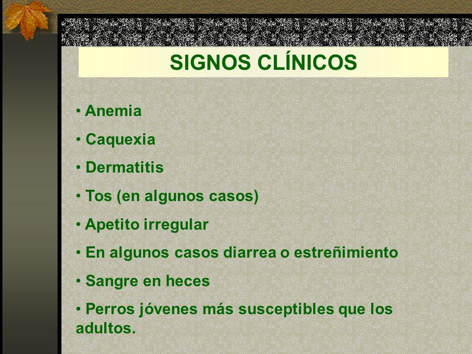 SIGNOS CLÍNICOS Anemia Caquexia Dermatitis Tos (en algunos casos)