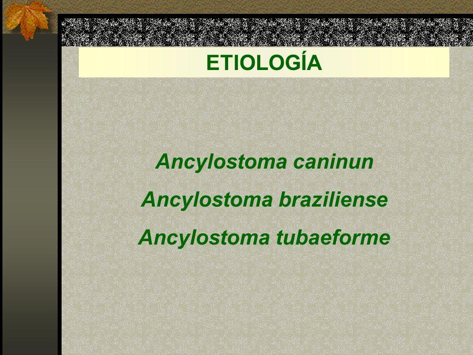 Ancylostoma braziliense Ancylostoma tubaeforme