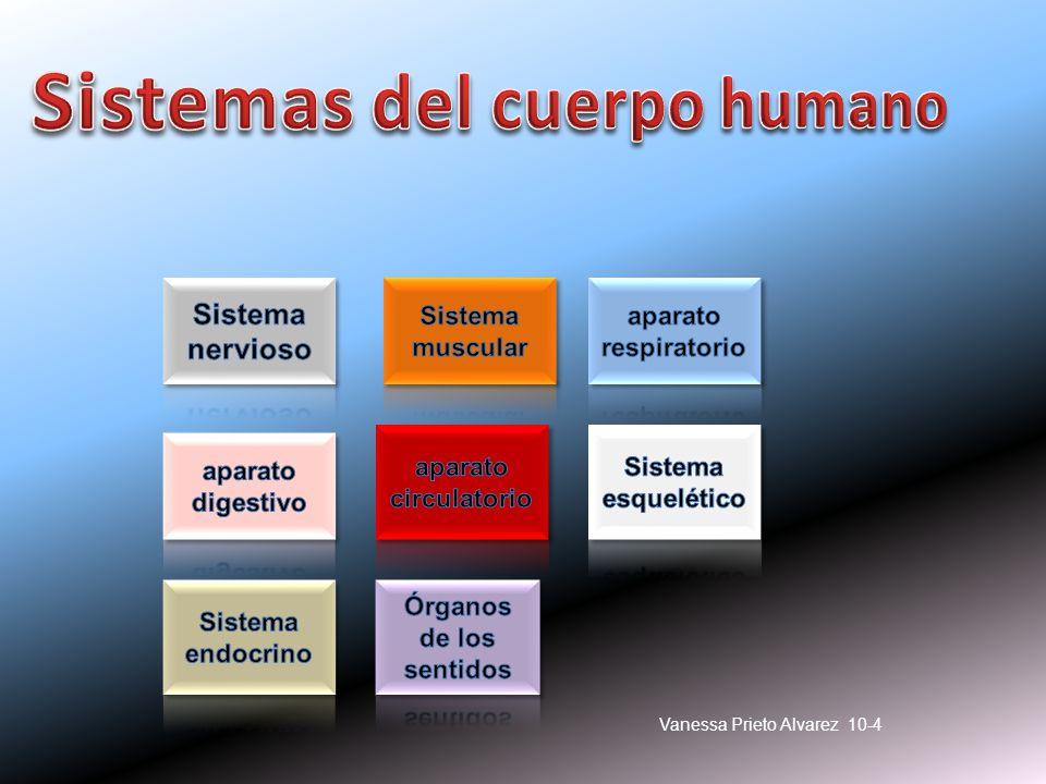 Sistemas del cuerpo humano Órganos de los sentidos - ppt descargar