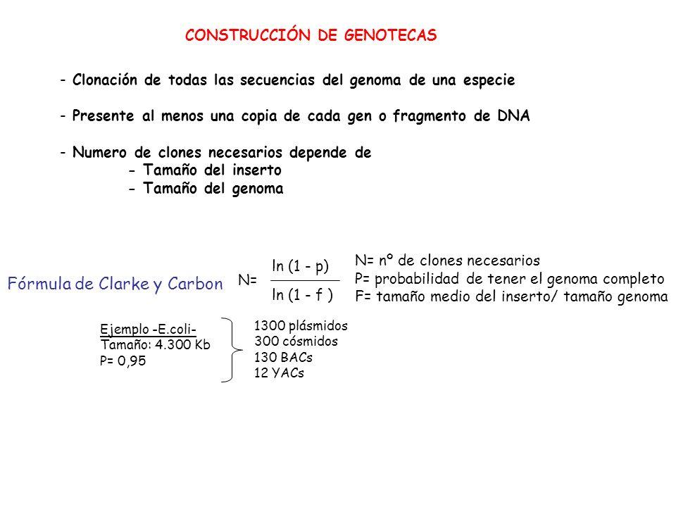 Fórmula de Clarke y Carbon