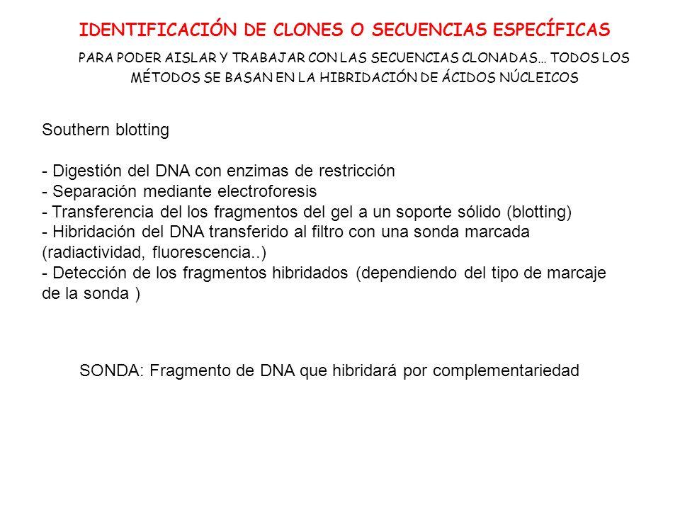 IDENTIFICACIÓN DE CLONES O SECUENCIAS ESPECÍFICAS
