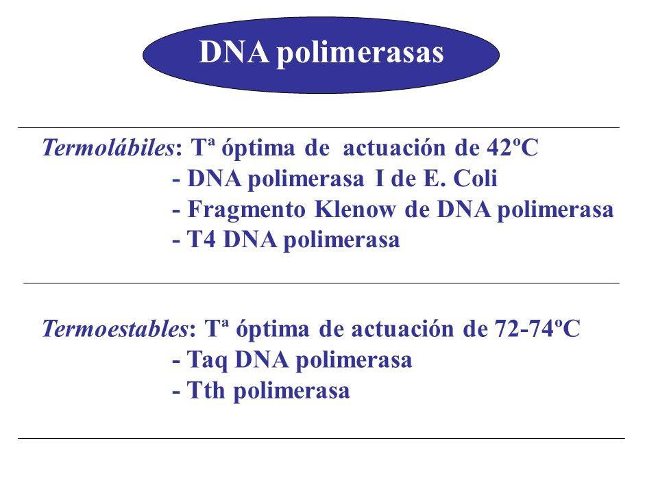 DNA polimerasas Termolábiles: Tª óptima de actuación de 42ºC
