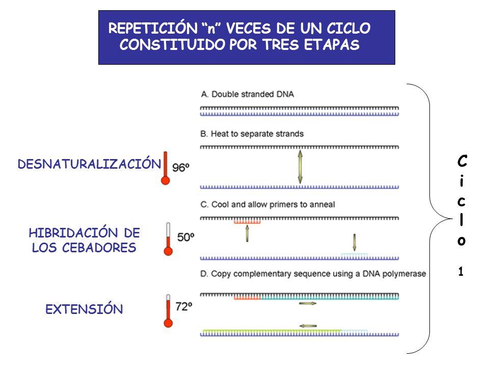Ciclo 1 REPETICIÓN n VECES DE UN CICLO CONSTITUIDO POR TRES ETAPAS