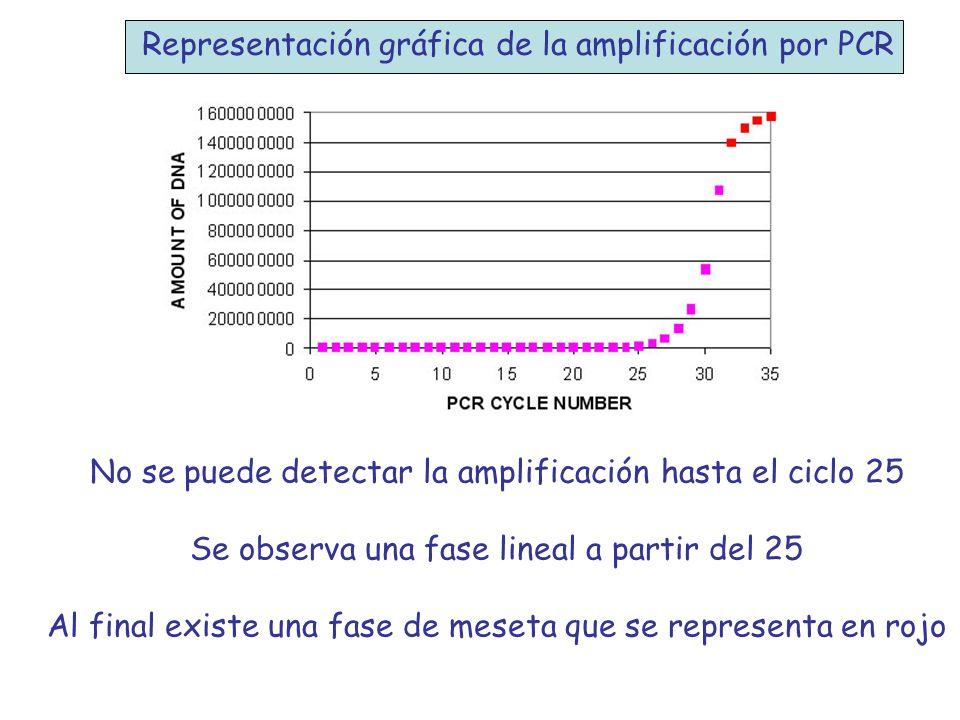 Representación gráfica de la amplificación por PCR