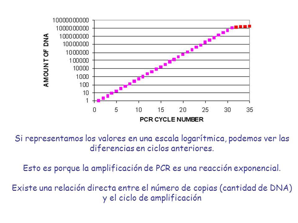 Esto es porque la amplificación de PCR es una reacción exponencial.
