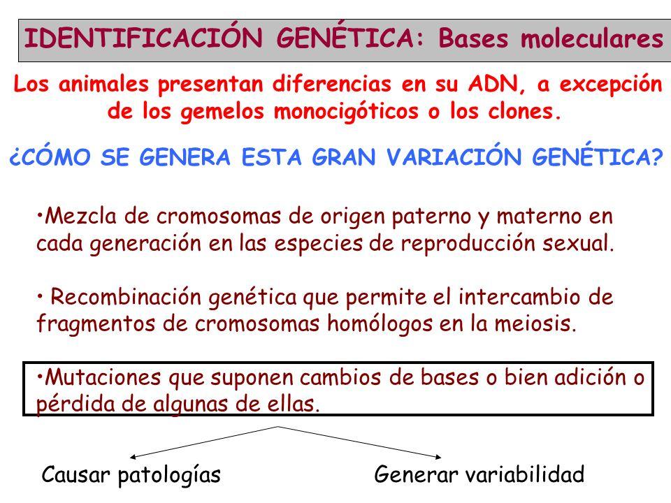 IDENTIFICACIÓN GENÉTICA: Bases moleculares