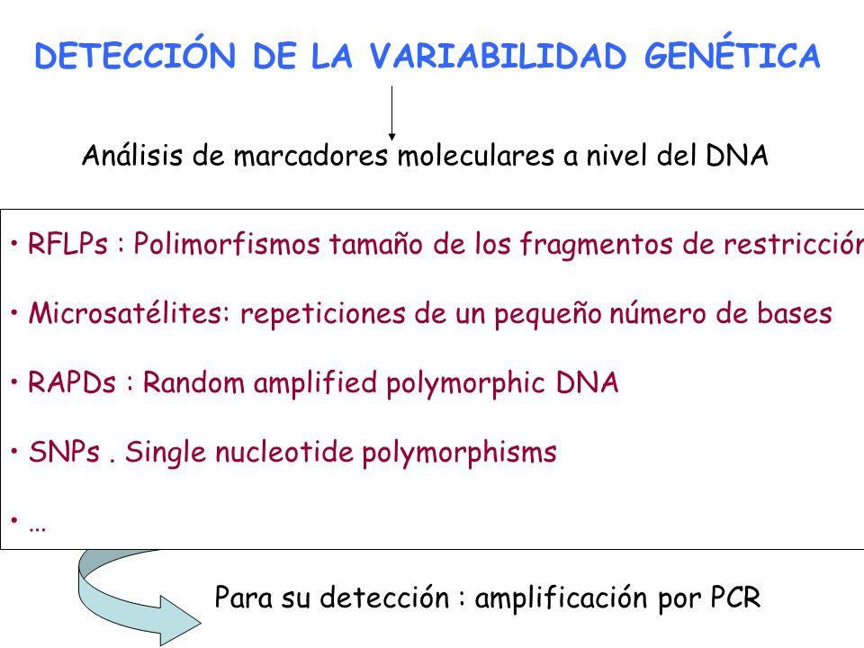 DETECCIÓN DE LA VARIABILIDAD GENÉTICA