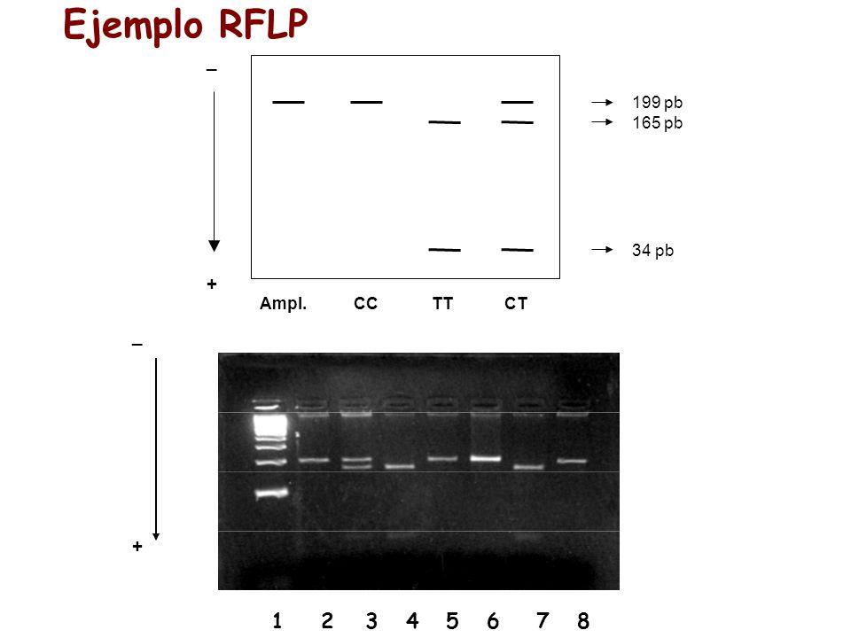 Ejemplo RFLP _ + _ + CC TT CT Ampl. 199 pb 165 pb 34 pb
