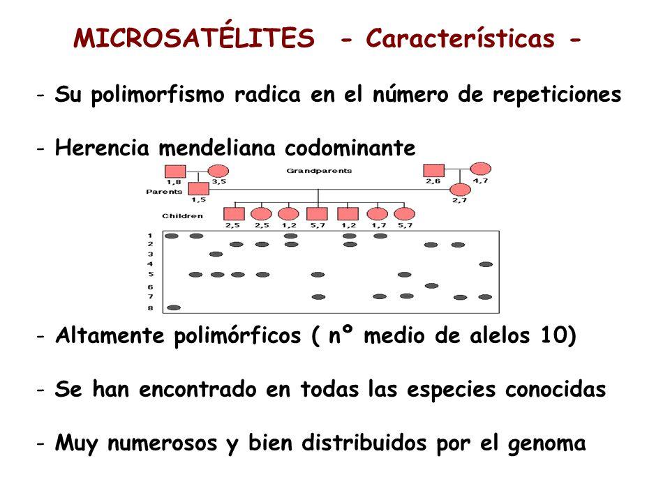 MICROSATÉLITES - Características -