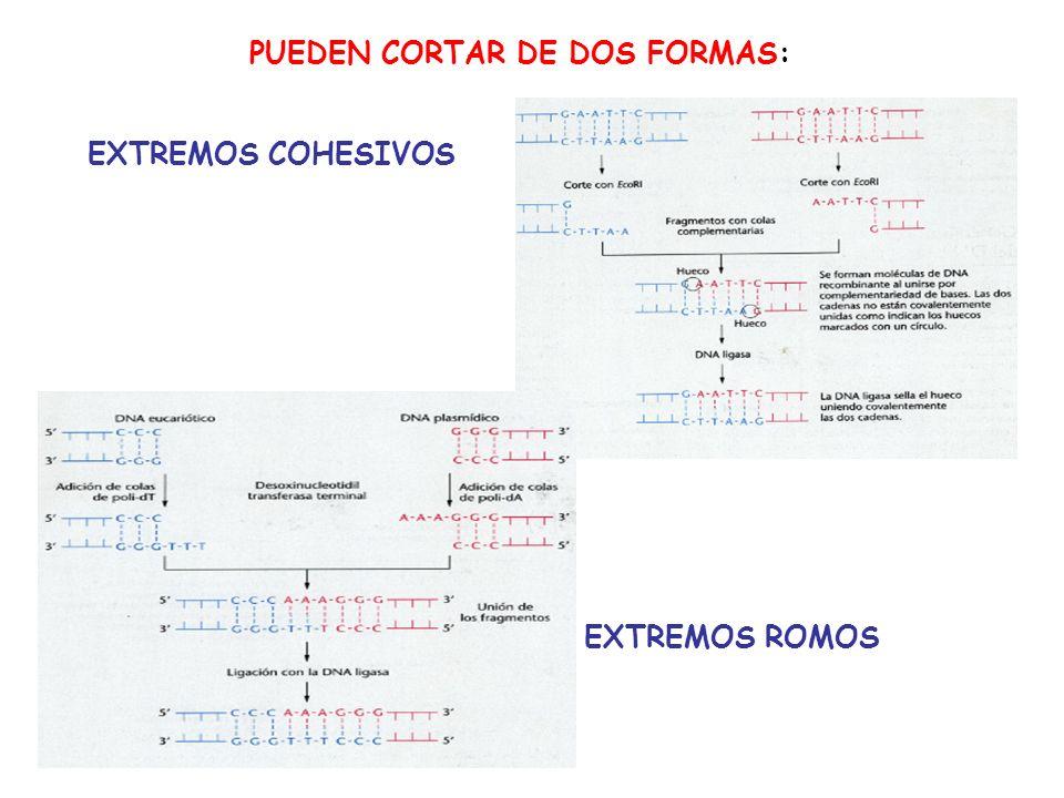 PUEDEN CORTAR DE DOS FORMAS: