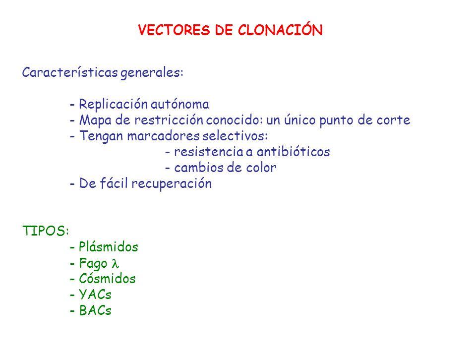VECTORES DE CLONACIÓN Características generales: - Replicación autónoma. - Mapa de restricción conocido: un único punto de corte.