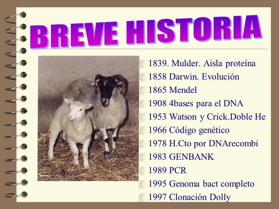 BREVE HISTORIA 1839. Mulder. Aisla proteína 1858 Darwin. Evolución