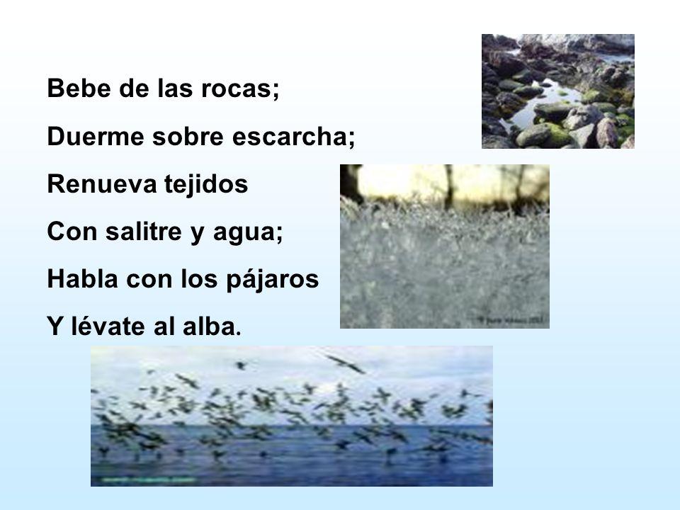 Bebe de las rocas; Duerme sobre escarcha; Renueva tejidos. Con salitre y agua; Habla con los pájaros.