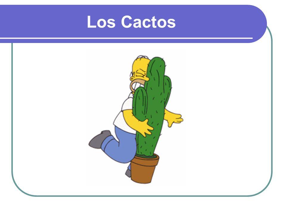 Los Cactos