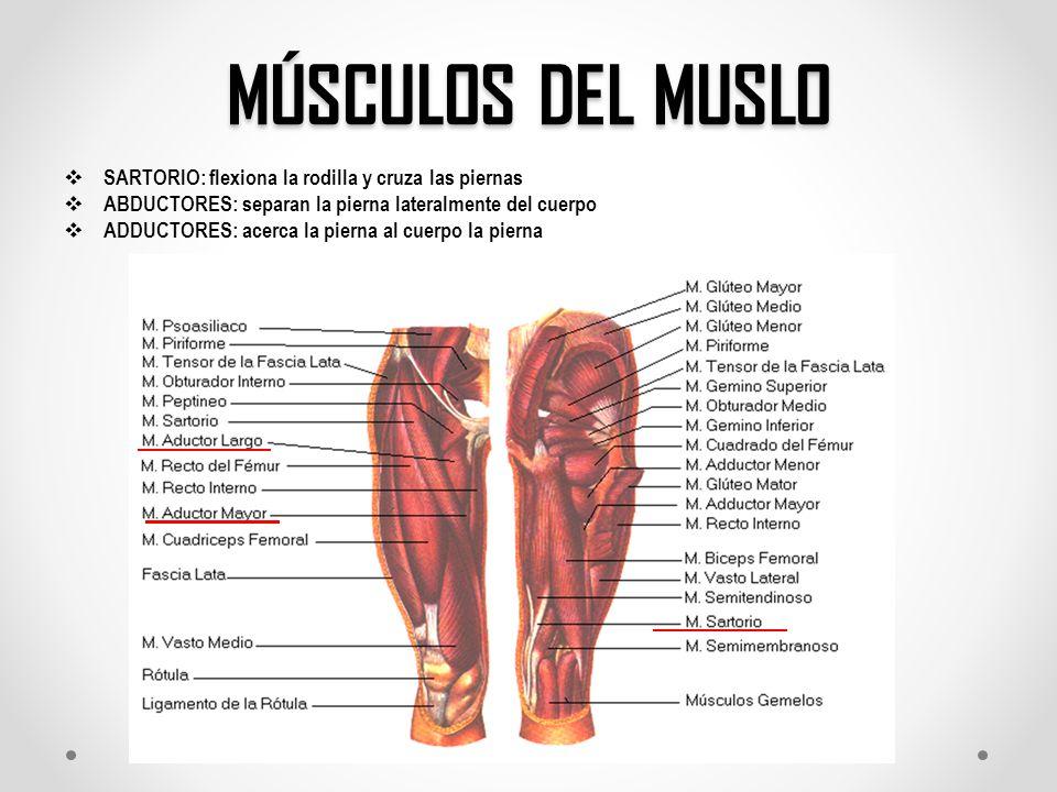 Moderno Anatomía Músculos Inferiores De La Pierna Festooning ...