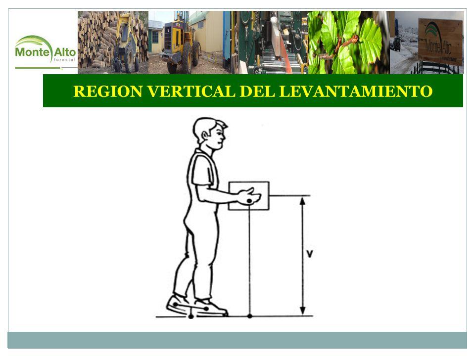 REGION VERTICAL DEL LEVANTAMIENTO