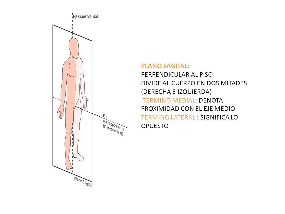 Excepcional Opuesta De La Anatomía Medial Modelo - Anatomía de Las ...