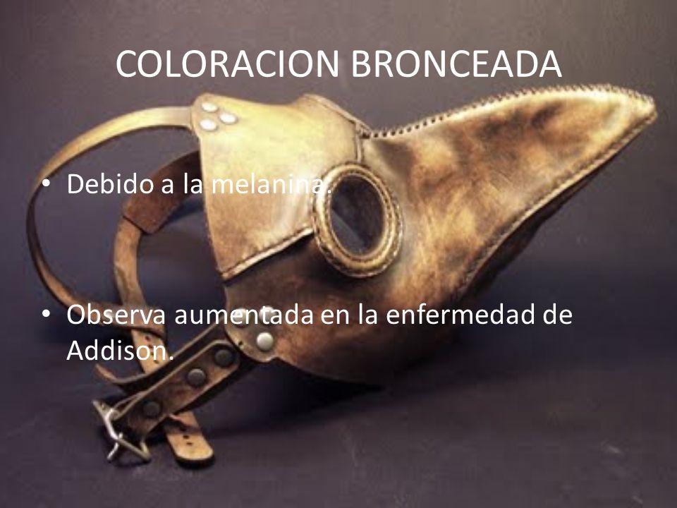 COLORACION BRONCEADA Debido a la melanina.