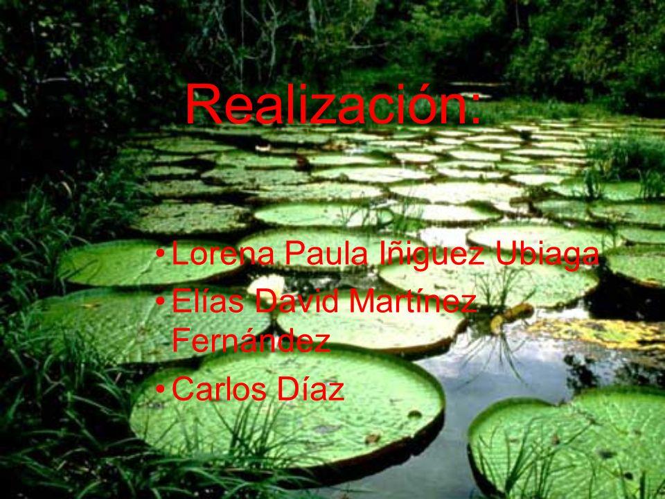 Realización: Lorena Paula Iñiguez Ubiaga