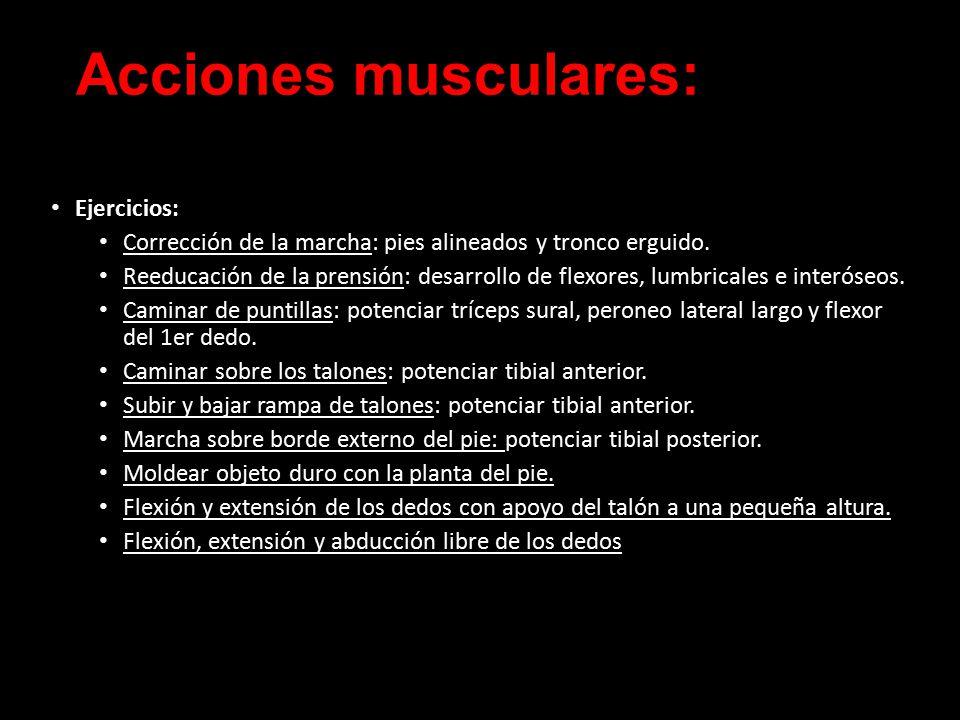 Fantástico Pies Musculares Patrón - Anatomía de Las Imágenesdel ...