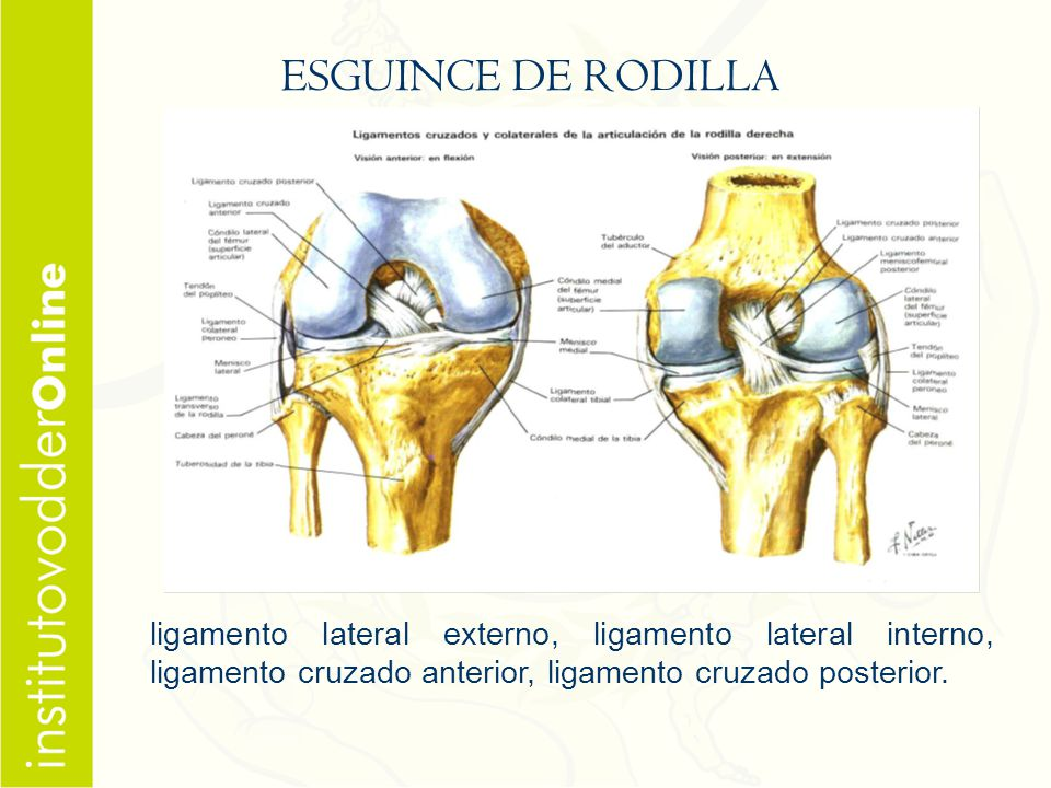 Atractivo Ligamentos Anatomía De La Rodilla Friso - Imágenes de ...