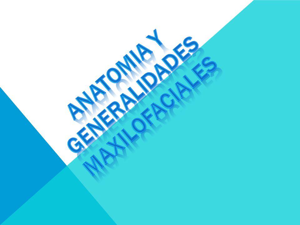 ANATOMIA Y GENERALIDADES MAXILOFACIALES - ppt video online descargar