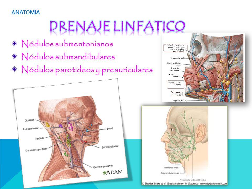 Único Linfático Escaleno Nodo Anatomía Bandera - Anatomía de Las ...