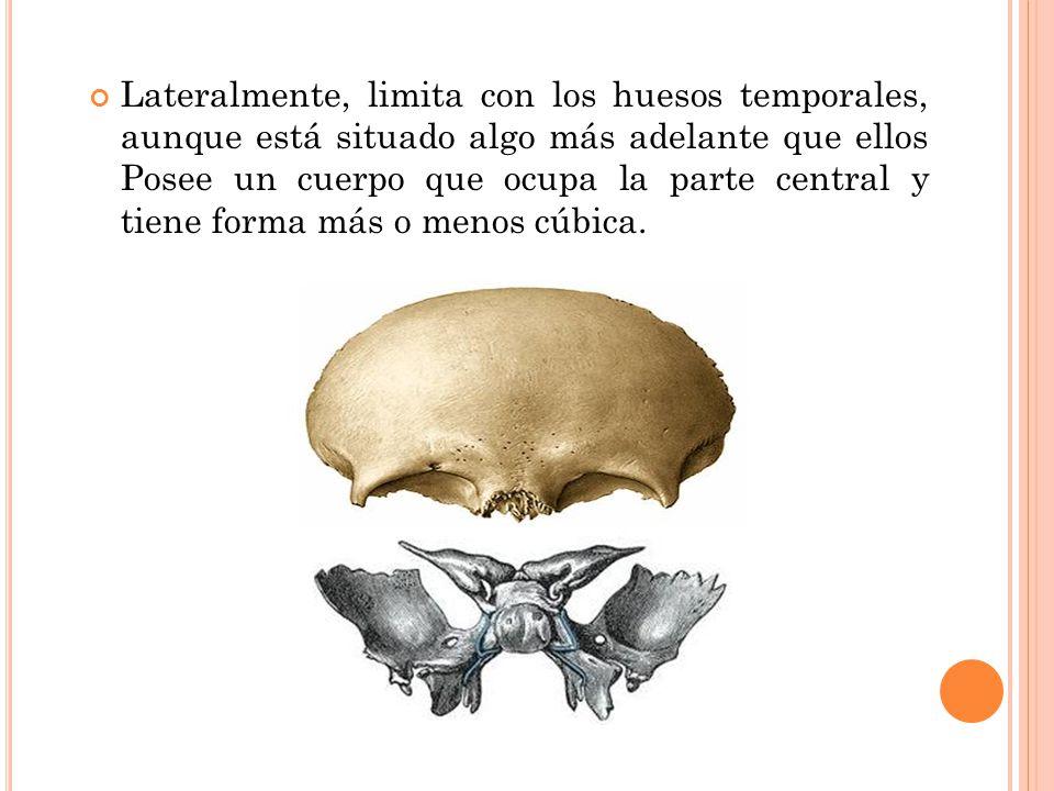 Famoso Ct Anatomía Del Hueso Temporal Colección de Imágenes ...