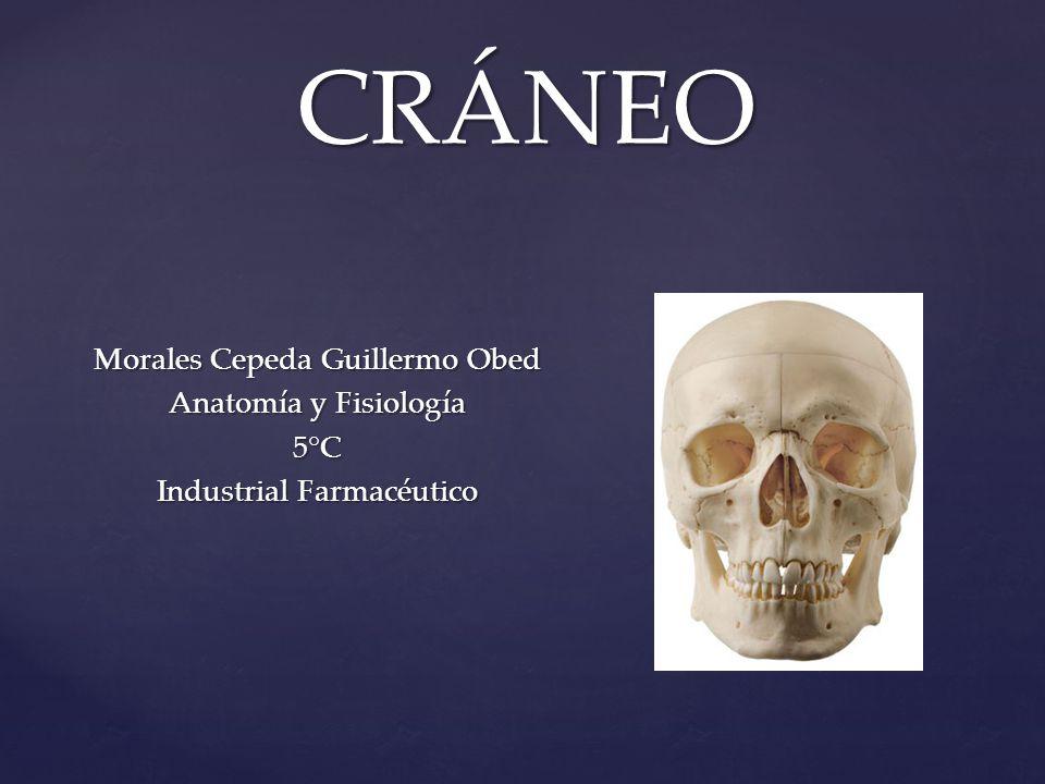 CRÁNEO Morales Cepeda Guillermo Obed Anatomía y Fisiología 5°C