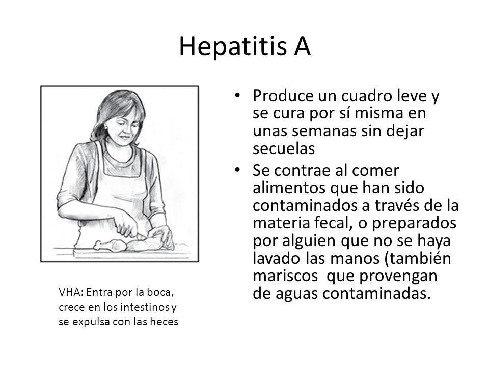 Hepatitis A Produce un cuadro leve y se cura por sí misma en unas semanas sin dejar secuelas.