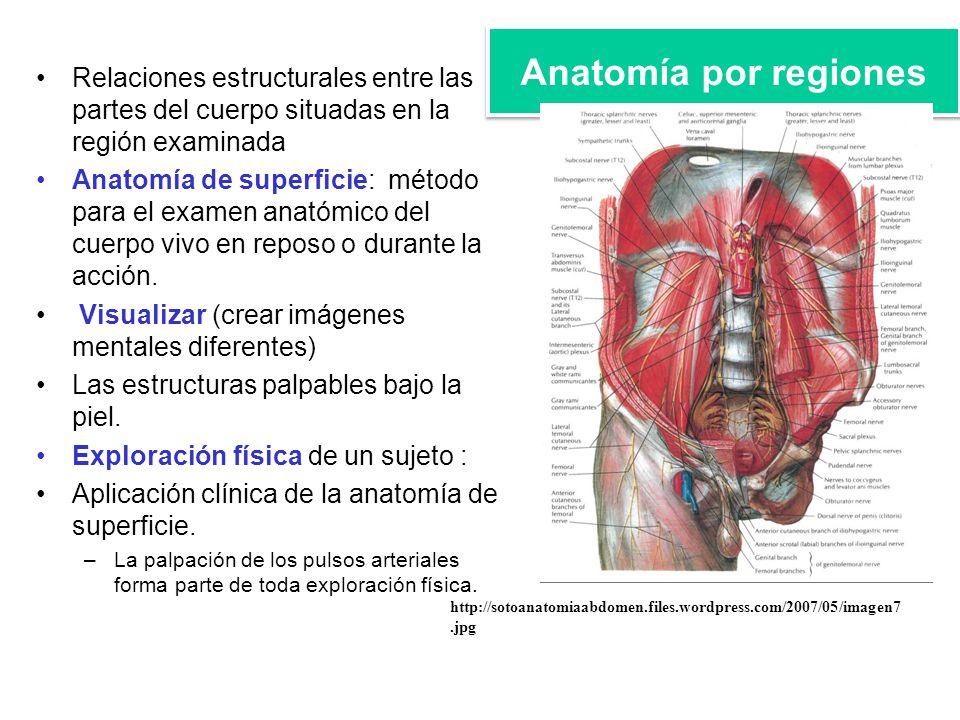 Contemporáneo Región De La Anatomía Mentales Cresta - Anatomía de ...