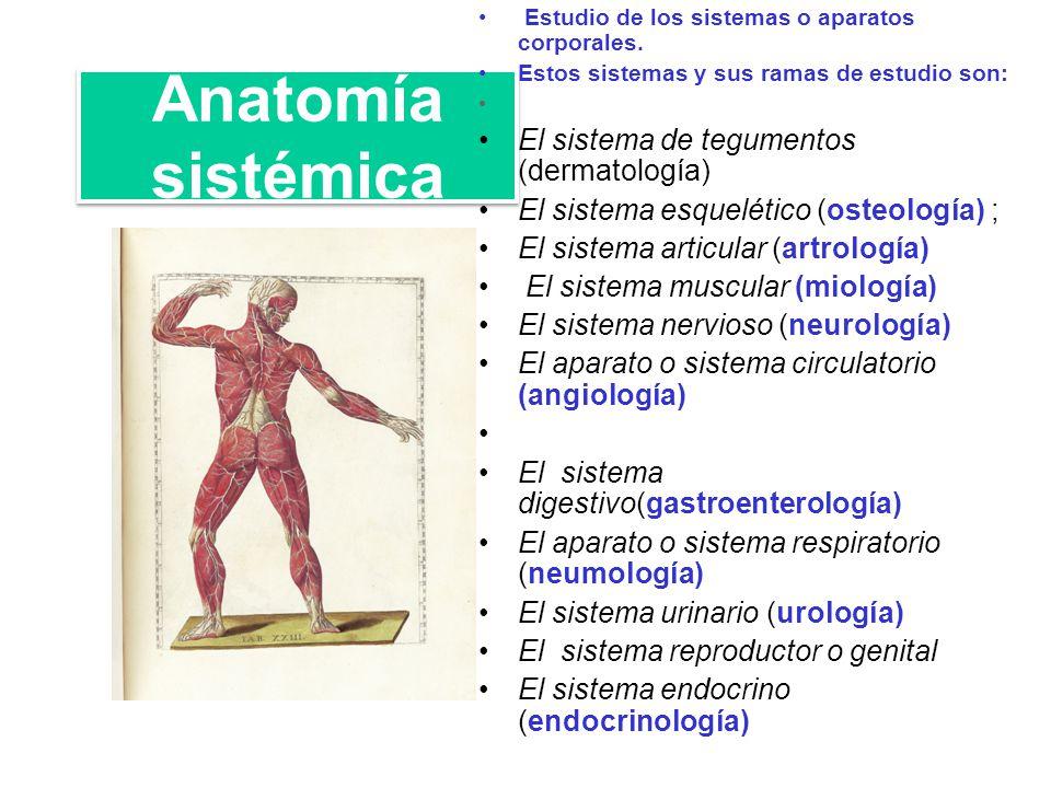 Encantador Anatomía Macroscópica De Un Músculo Esquelético Ideas ...