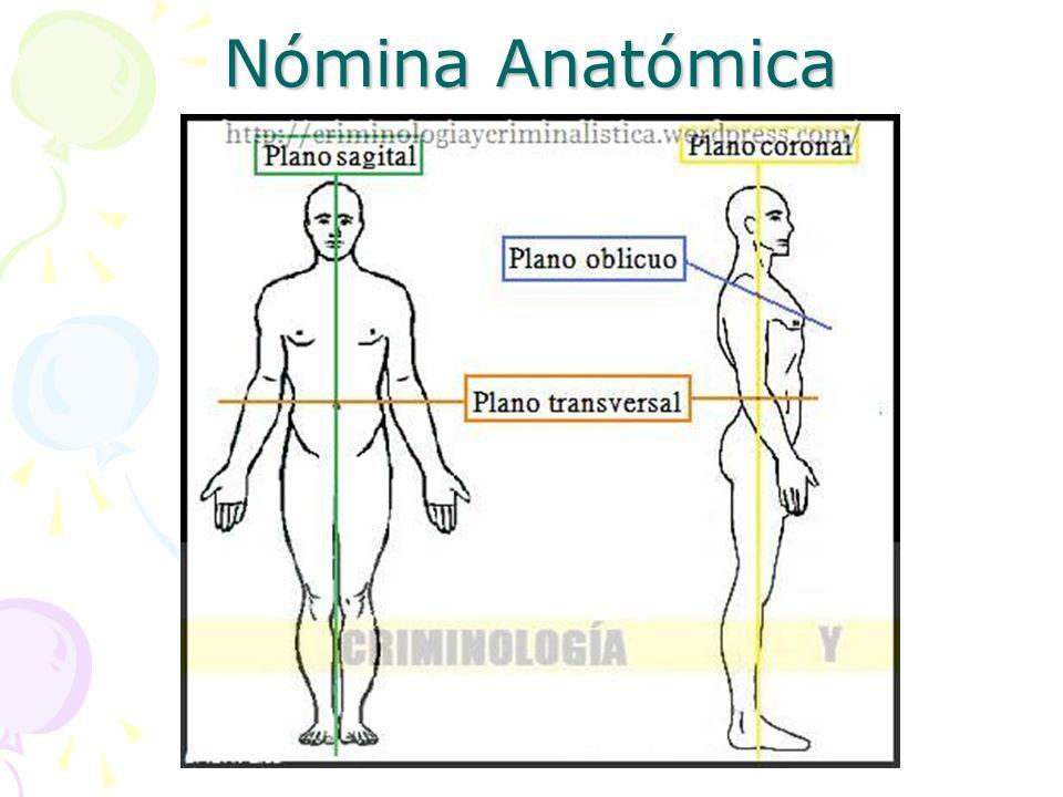 Bonito Plano Oblicuo Definición Anatomía Patrón - Anatomía de Las ...