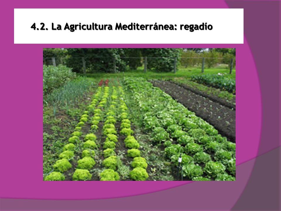 4.2. La Agricultura Mediterránea: regadío
