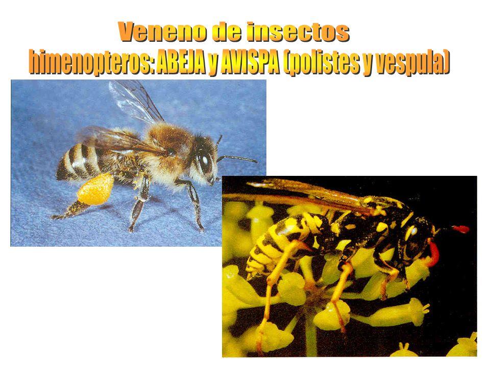 himenopteros: ABEJA y AVISPA (polistes y vespula)