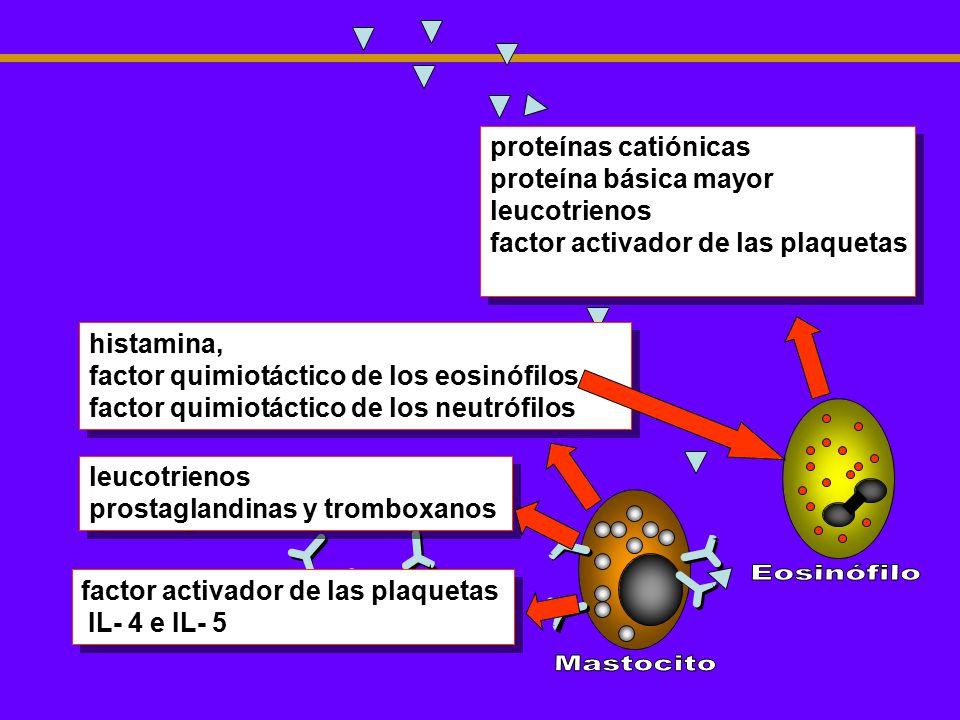 Célula plasmática Eosinófilo Mastocito proteínas catiónicas