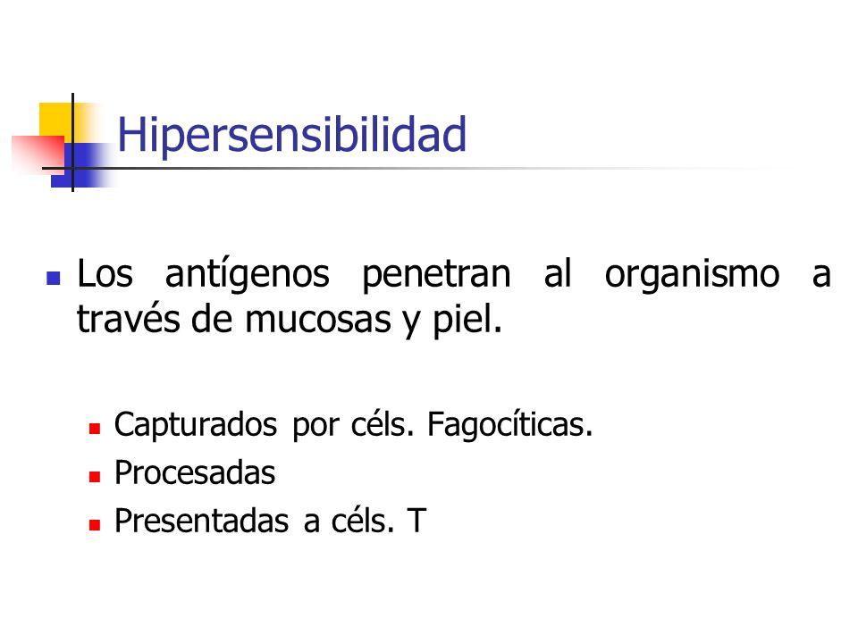Hipersensibilidad Los antígenos penetran al organismo a través de mucosas y piel. Capturados por céls. Fagocíticas.