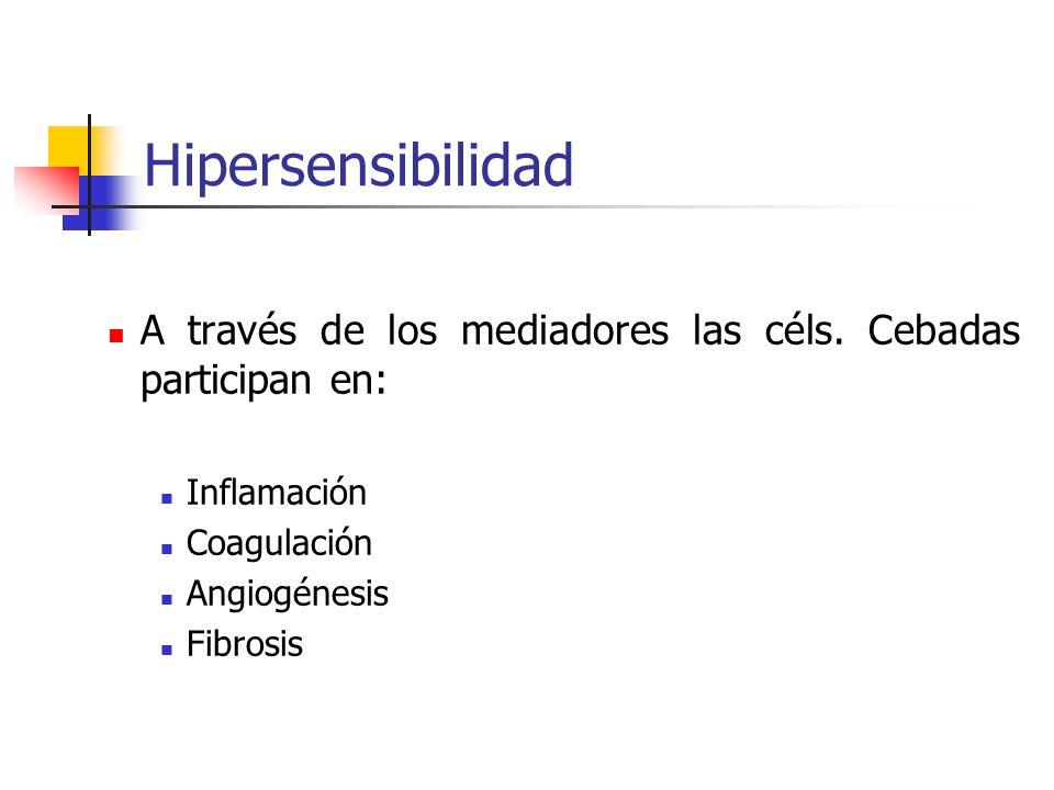 Hipersensibilidad A través de los mediadores las céls. Cebadas participan en: Inflamación. Coagulación.