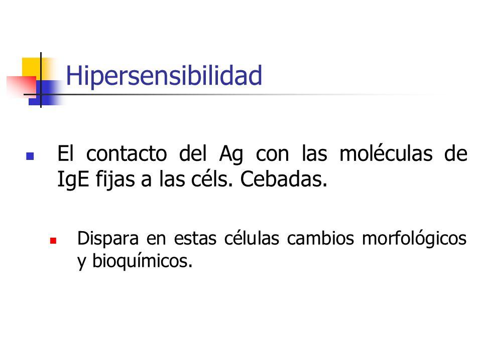 Hipersensibilidad El contacto del Ag con las moléculas de IgE fijas a las céls. Cebadas.