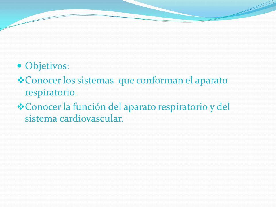 Objetivos: Conocer los sistemas que conforman el aparato respiratorio.