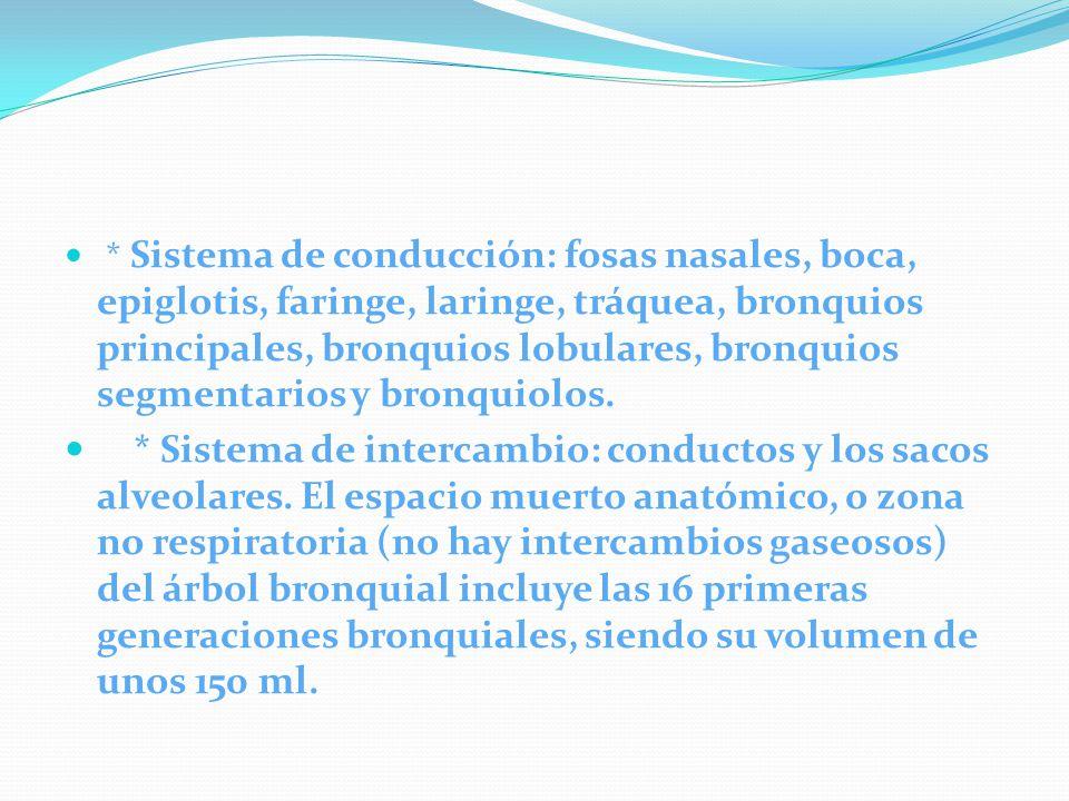 * Sistema de conducción: fosas nasales, boca, epiglotis, faringe, laringe, tráquea, bronquios principales, bronquios lobulares, bronquios segmentarios y bronquiolos.