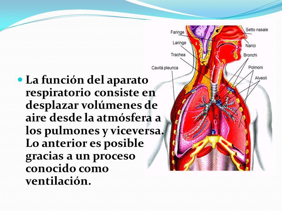 La función del aparato respiratorio consiste en desplazar volúmenes de aire desde la atmósfera a los pulmones y viceversa.