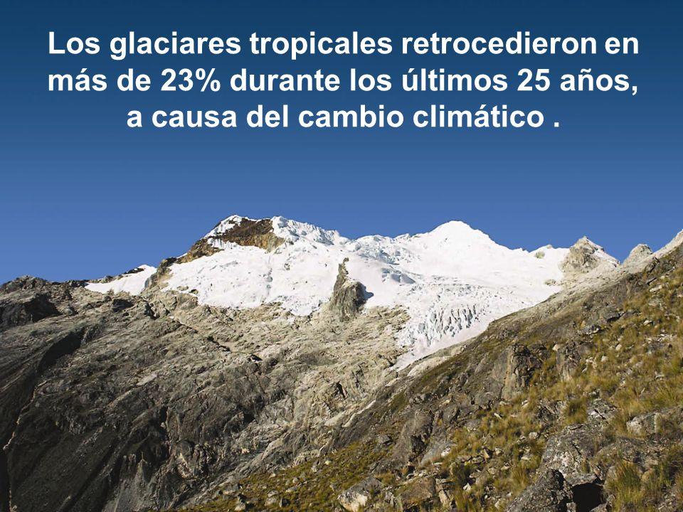 Los glaciares tropicales retrocedieron en más de 23% durante los últimos 25 años, a causa del cambio climático .