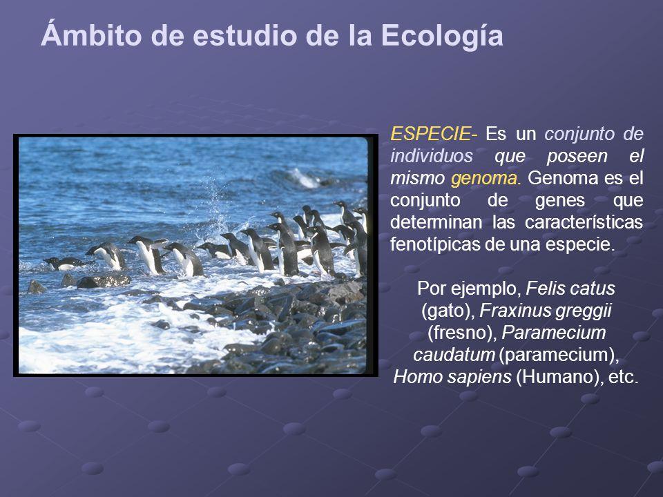 Definici n de la ecolog a objeto de estudio de la ecolog a for Fresno caracteristicas