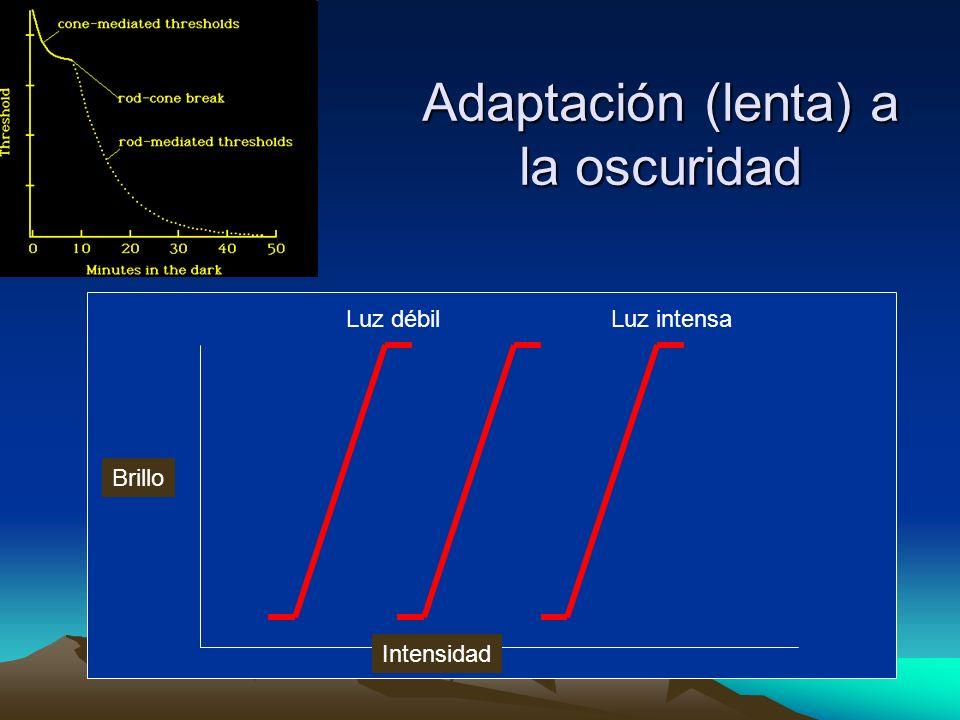 Adaptación (lenta) a la oscuridad